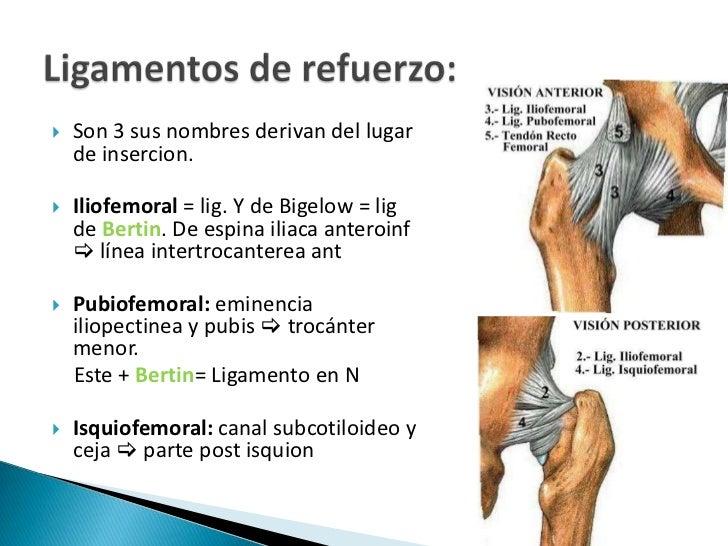 Asombroso Ligamento Isquiofemoral Cresta - Anatomía de Las ...