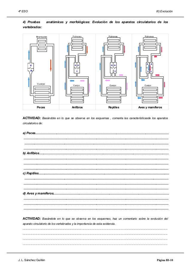 Lujo Anatomía Comparativa De Los Vertebrados Del Sistema ...
