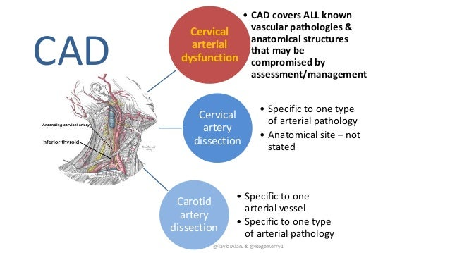 @TaylorAlanJ & @RogerKerry1 Cervical arterial dysfunction • CAD covers ALL known vascular pathologies & anatomical structu...