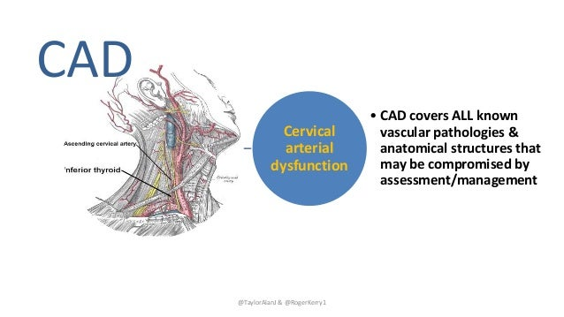 Cervical arterial dysfunction • CAD covers ALL known vascular pathologies & anatomical structures that may be compromised ...