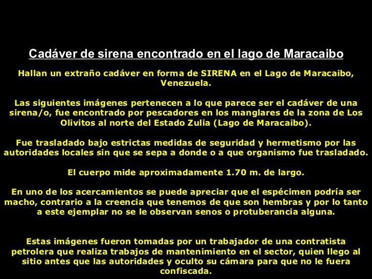 Cadáver de sirena encontrado en el lago de Maracaibo Hallan un extraño cadáver en forma de SIRENA en el Lago de Maracaibo,...