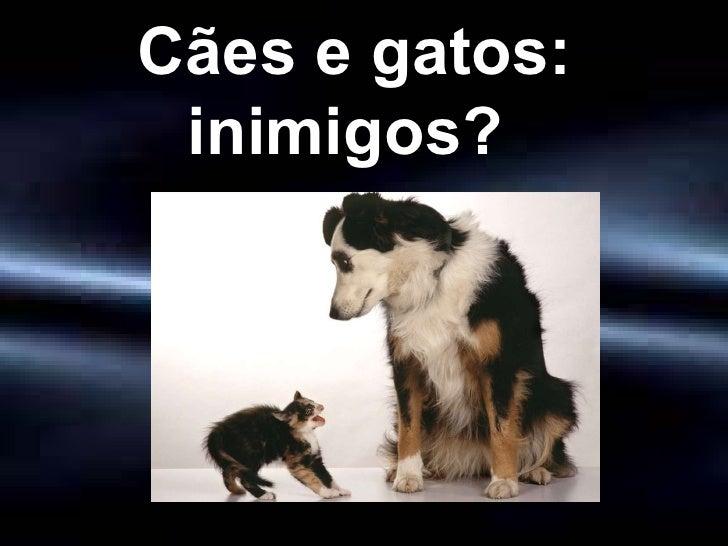 Cães e gatos: inimigos?
