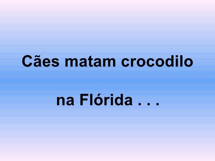 Cães matam crocodilo  na Flórida . . .