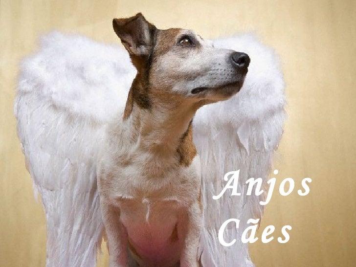 Anjos Cães