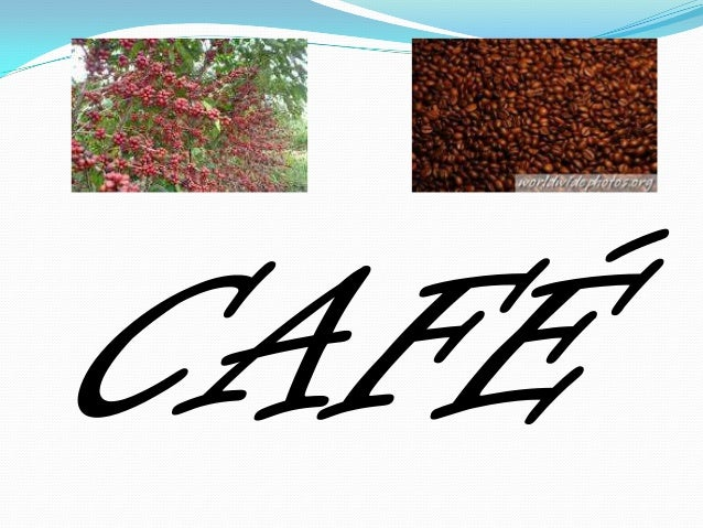 Introdução  Colheita de café                   O Café – a Coffea arábica.O desempenho da economia durante o PrimeiroReinad...