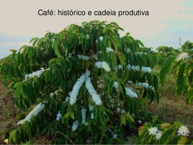 Café: histórico e cadeia produtiva