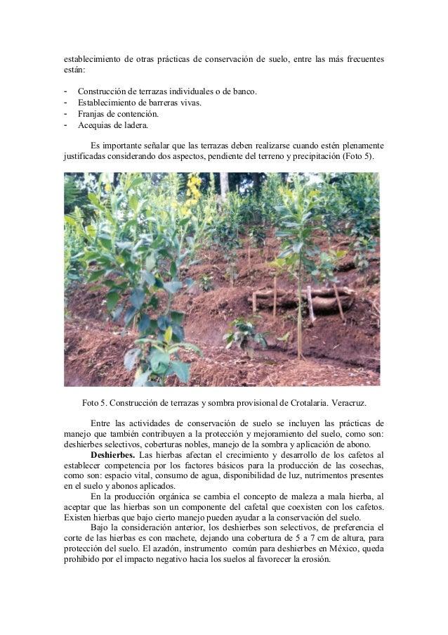 Cafe organico produccion y certificacion en mexico for Terrazas individuales
