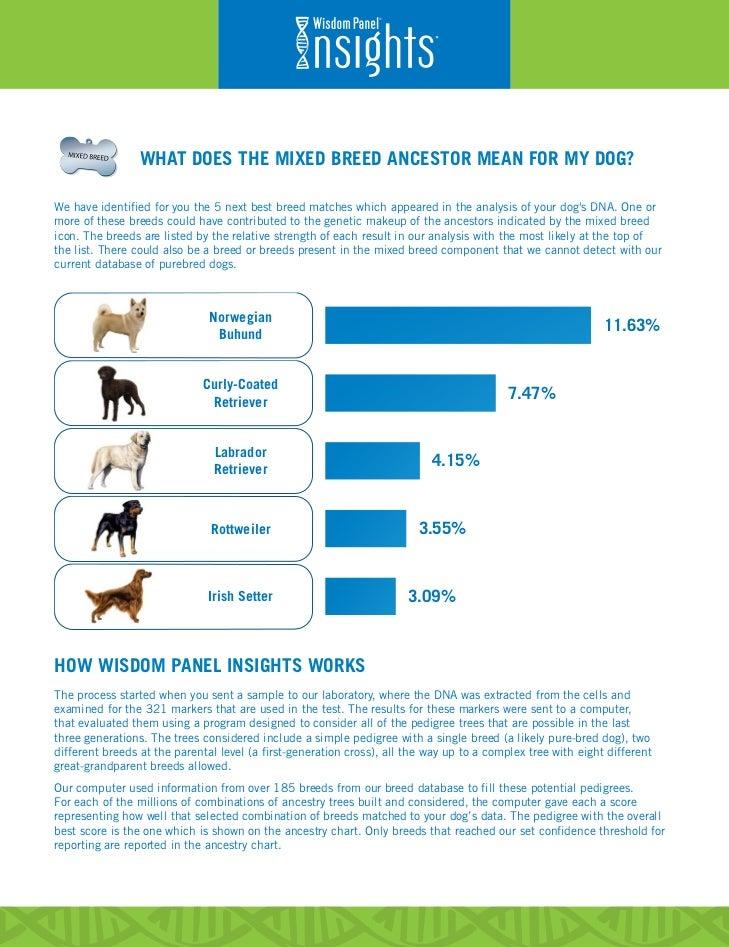 Best Dog Ancestry Test
