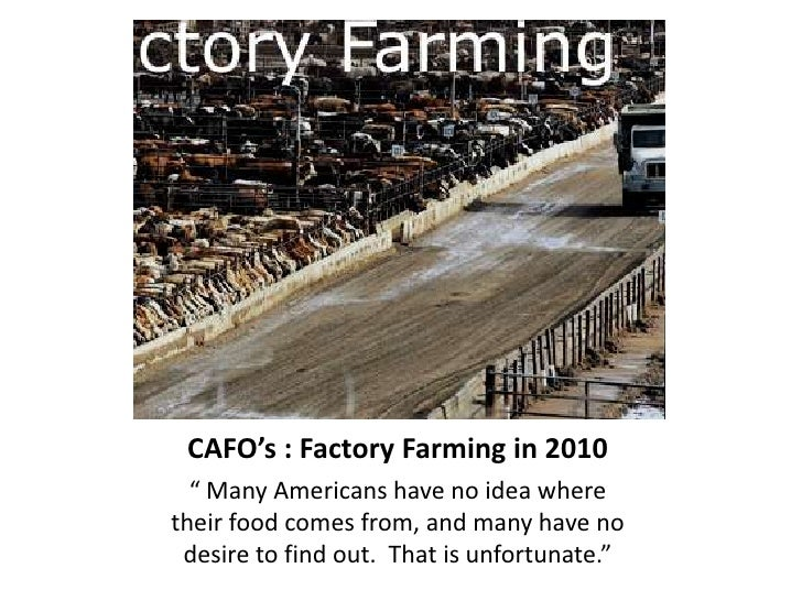 """CAFO's : Factory Farming in 2010<br />"""" Many Americans have no idea where their food comes from, and many have no desire t..."""