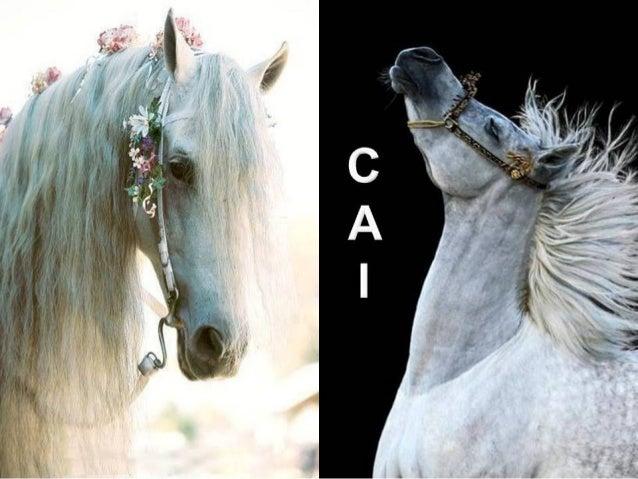 Frumusetea calului