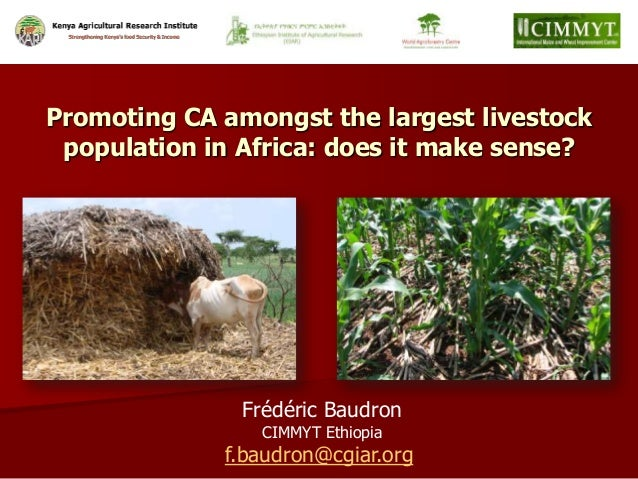 Frédéric Baudron CIMMYT Ethiopia f.baudron@cgiar.org Promoting CA amongst the largest livestock population in Africa: does...