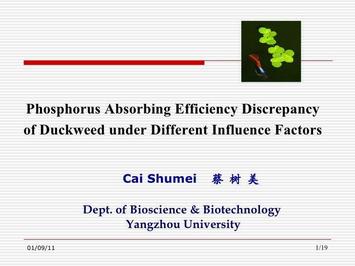 Cai Shumei  蔡 树 美 Phosphorus Absorbing Efficiency Discrepancy  of Duckweed under Different Influence Factors  Dept. of Bio...