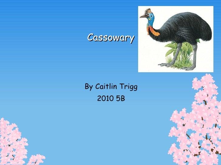 Cassowary By Caitlin Trigg 2010 5B