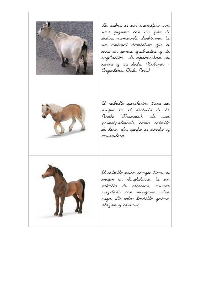 La ≠aª˘a es un mamífero ≠oõ una pezuña ≠oõ un par de dedÄ´, rumiante, herbÀvÖ˘o. Es un animal doöéstico que se cría en çoõ...