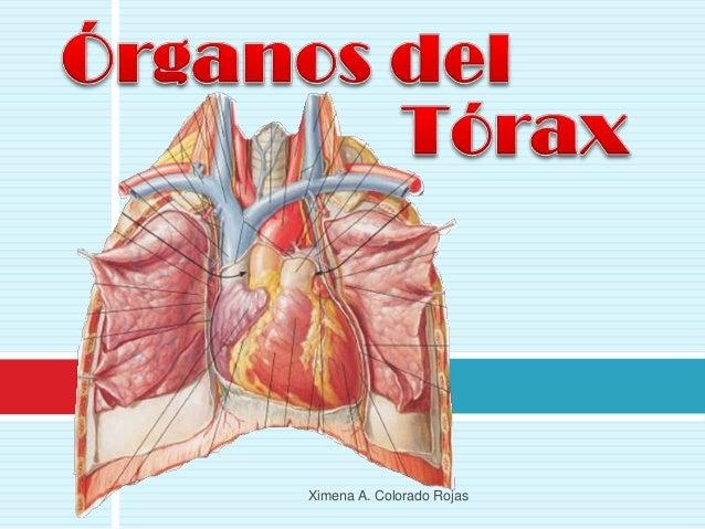 Caja toracica y diafragma