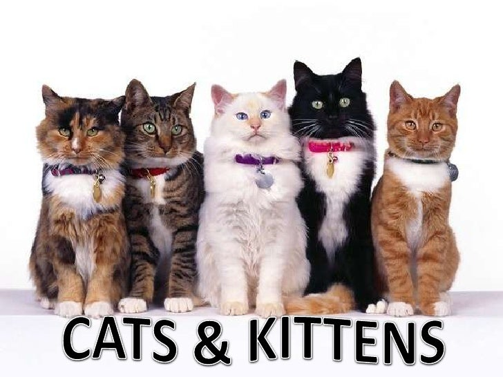 CATS & KITTENS<br />