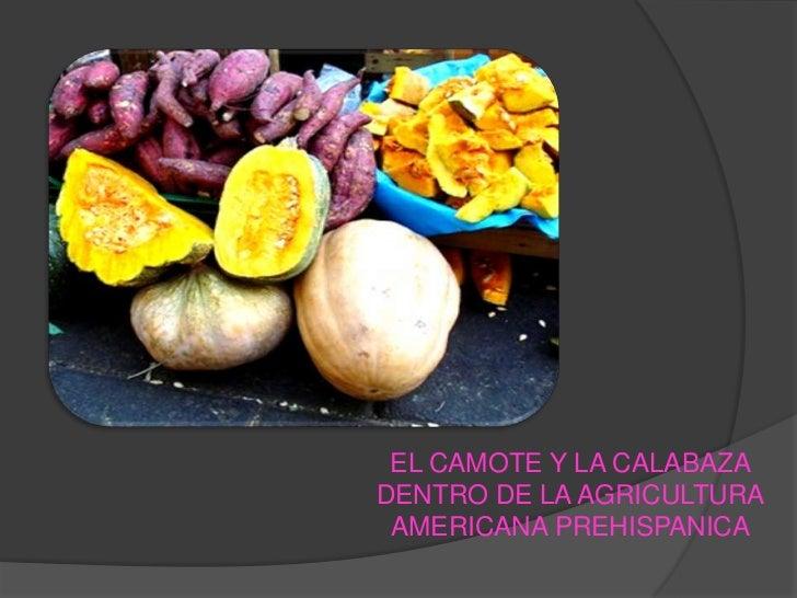 EL CAMOTE Y LA CALABAZA DENTRO DE LA AGRICULTURA AMERICANA PREHISPANICA <br />