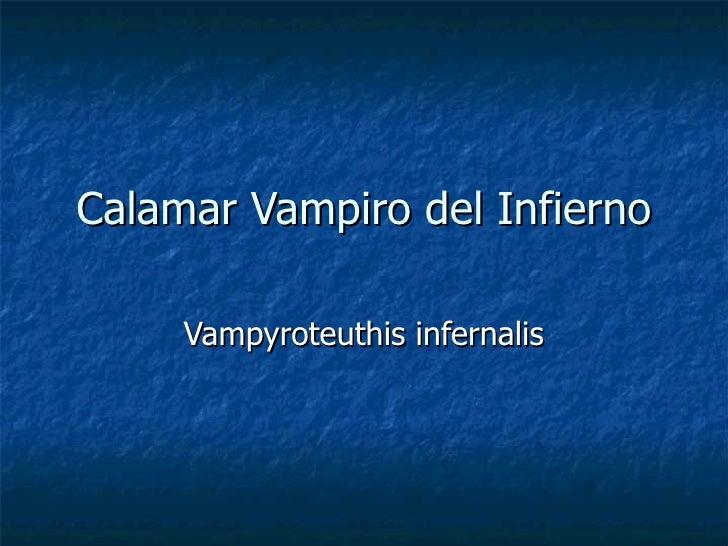 Calamar Vampiro del Infierno Vampyroteuthis infernalis