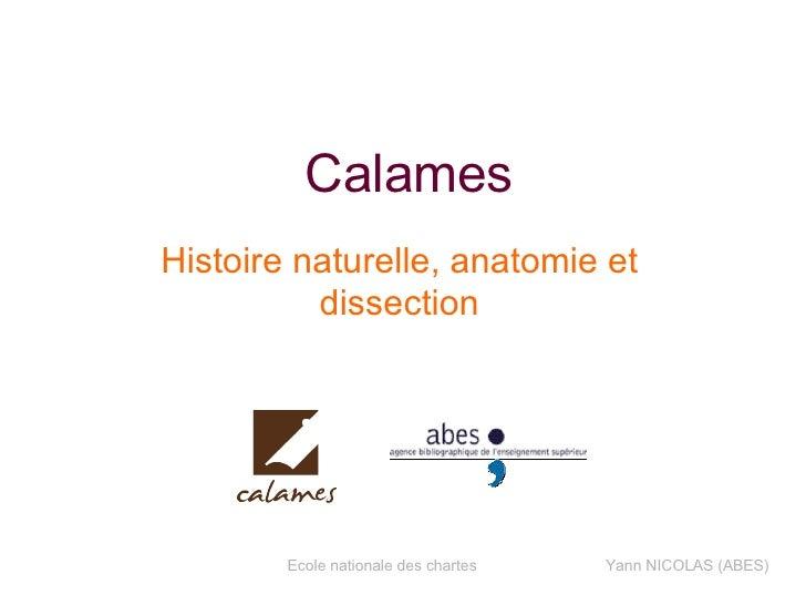 Calames Histoire naturelle, anatomie et dissection