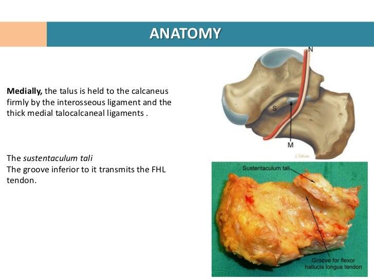 calcaneal fractures, Human Body