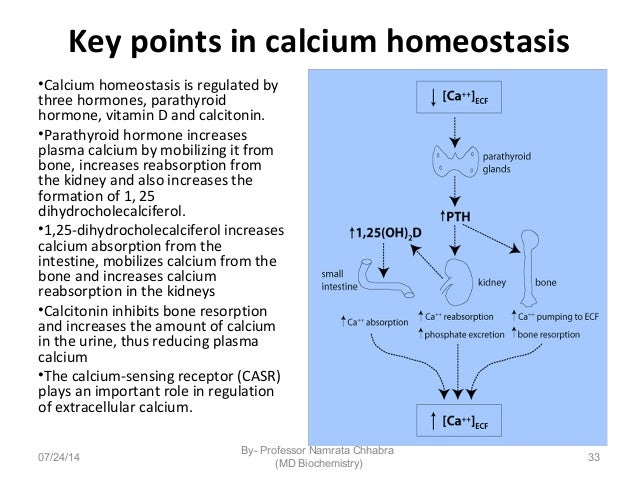 Calcium Functions And Significance. 33 Key Points In Calcium Homeostasis. Wiring. Bones In Calcium Homeostasis Diagram At Scoala.co