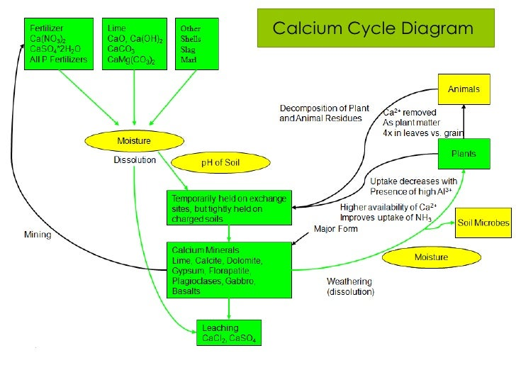 diagram of calcium cycle wiring diagram schematics Blood Calcium Diagram diagram of calcium cycle