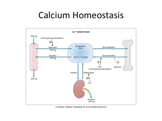 Calcium Homeostasis. Dcalcitonin 15 Calcium Homeostasis. Wiring. Bones In Calcium Homeostasis Diagram At Scoala.co