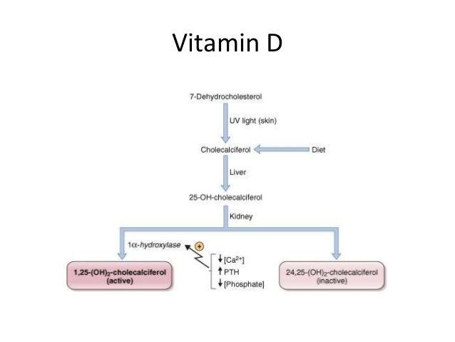 Calcium Homeostasis. Olecalciferol 26 Vitamin D. Wiring. Homeostasis Diagram Of Vit D At Scoala.co