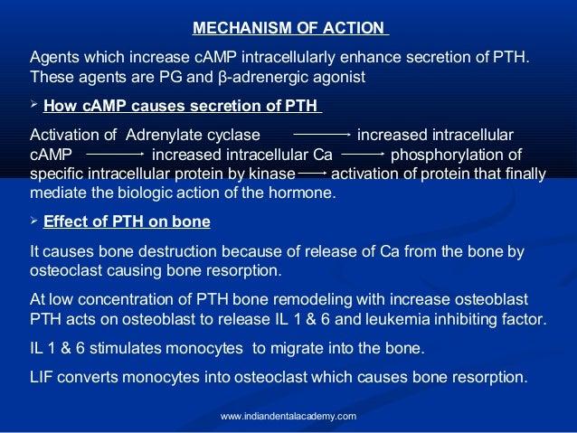 calcium metabolism1