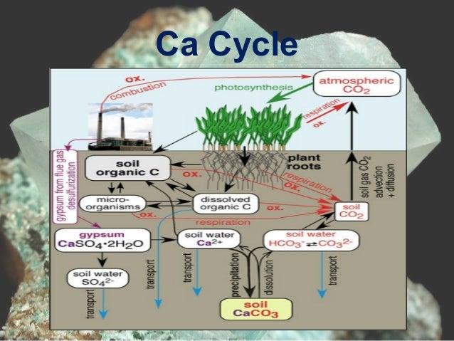 Secondary Macronutrient   Calcium