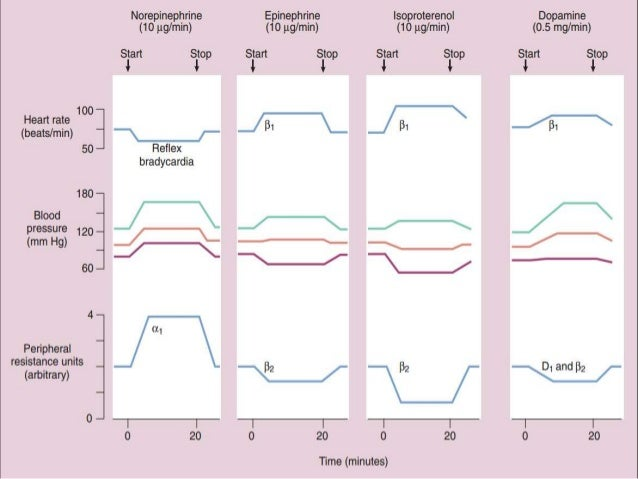 effects of drugs on heart rate Drugs affecting the autonomic nervous system  increases heart rate and force of contraction  what are the effects of adrenergic/sympathomimetic drugs,.