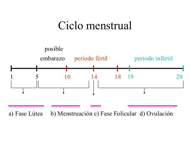 Calendario Fertil.Calendario