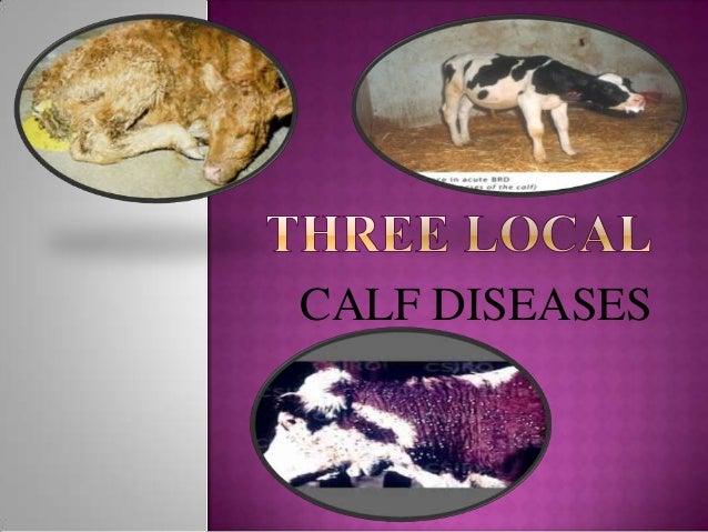 CALF DISEASES