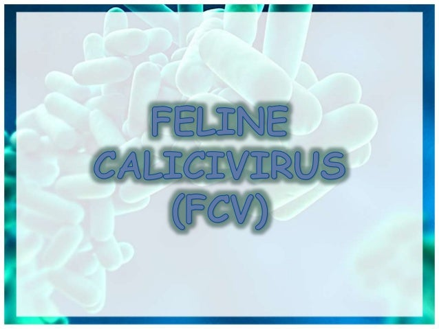 Caliciviridae For Veterinary Students