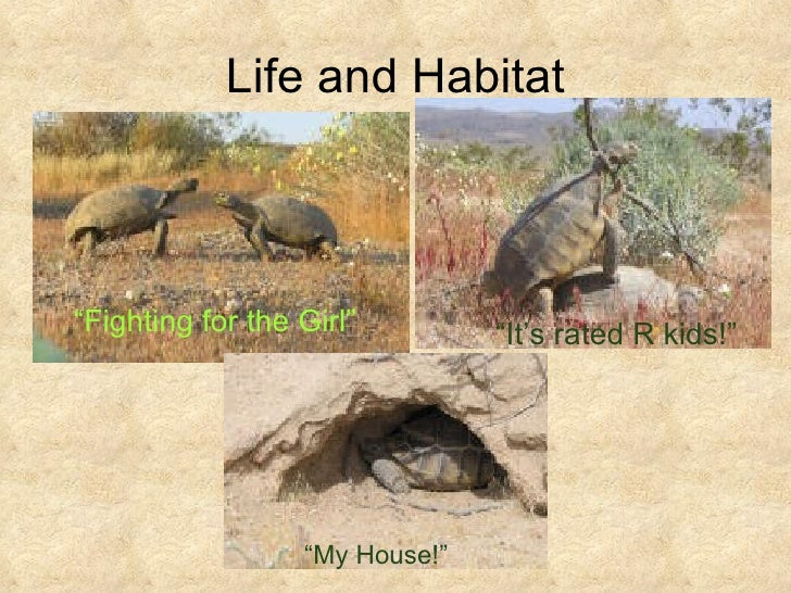 an overview of the anatomy and habitat of desert turtles in california California desert district  the purpose of the west mojave plan is to develop management strategies for the desert tortoise,  a summary of these modifications .