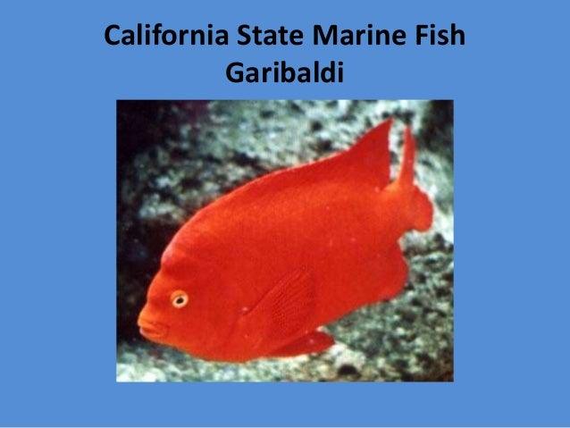 California Symbols For Kindergarten
