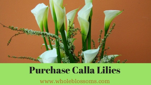 Beautiful Varieties Of Calla Lily Flowers