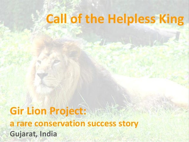 Gir Lion Project: a rare conservation success story Call of the Helpless King Gujarat, India