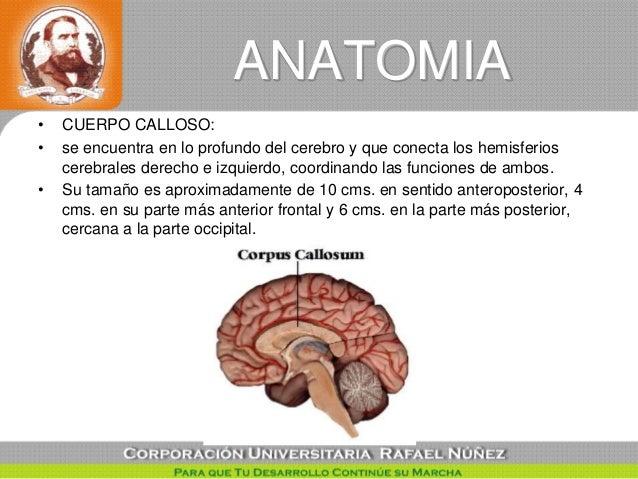 Callosotomia tecnica quirurgica