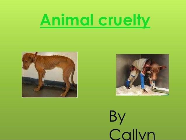 Animal cruelty        By