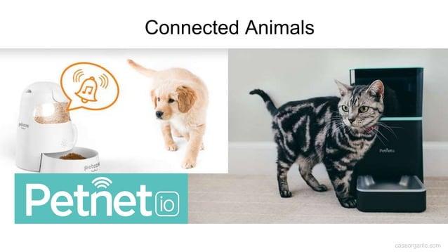 caseorganic.com Connected Animals