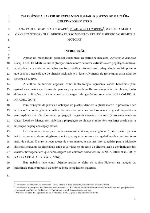 CALOGÊNSE A PARTIR DE EXPLANTES FOLIARES JOVENS DE MACAÚBA1 CULTIVADOS IN VITRO.2 ANA PAULA DE SOUZA ANDRADE1 , THAIS ROSE...
