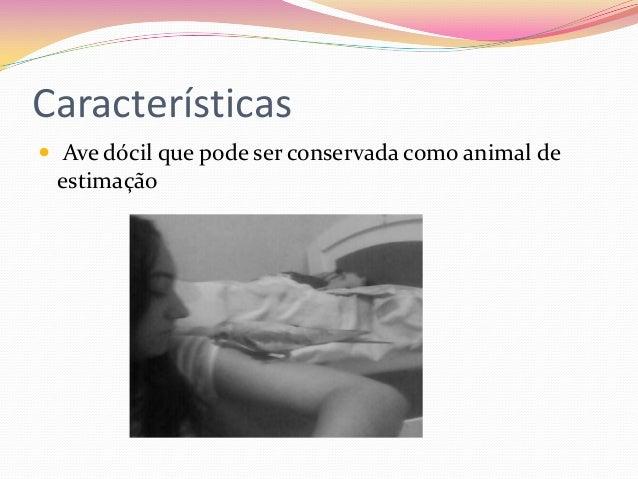 Calopsita Slide 2