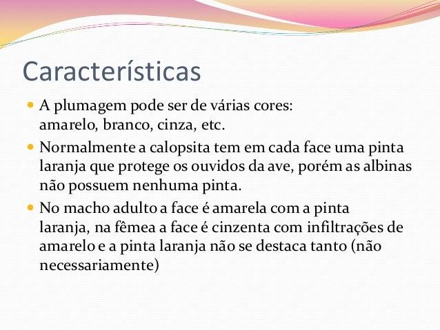 Calopsita Slide 3