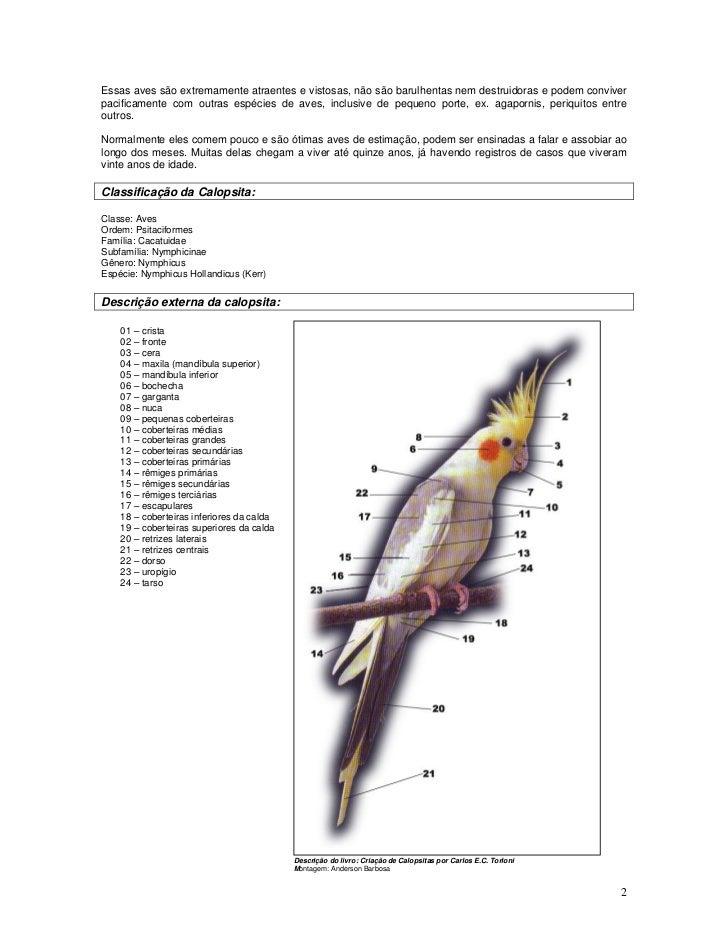 Essas aves são extremamente atraentes e vistosas, não são barulhentas nem destruidoras e podem conviver pacificamente com ...