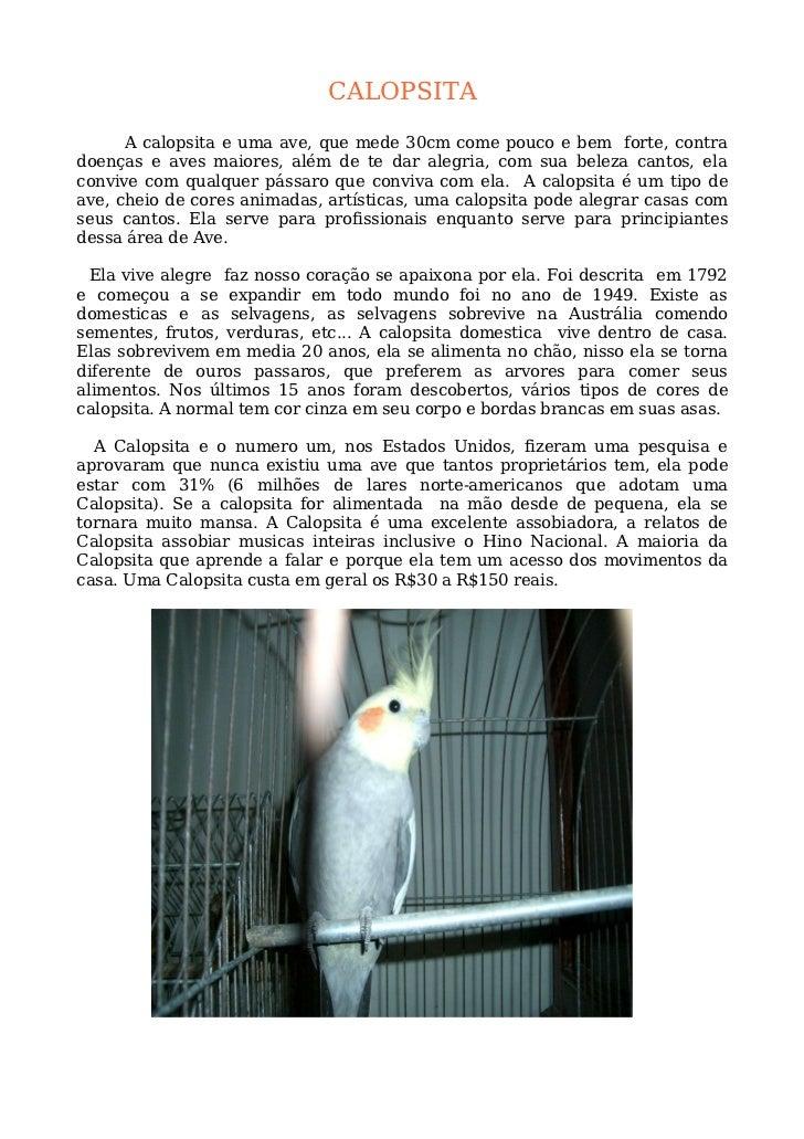 CALOPSITA        A calopsita e uma ave, que mede 30cm come pouco e bem forte, contra doenças e aves maiores, além de te da...