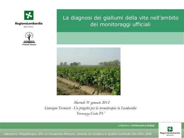 La diagnosi dei giallumi della vite nell'ambito dei monitoraggi ufficiali  Martedi 31 gennaio 2012 Convegno Termovit - Un ...