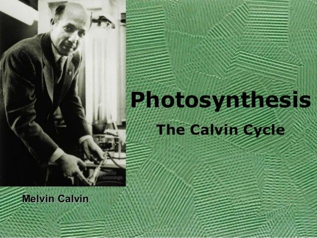 Photosynthesis The Calvin Cycle  Melvin Calvin
