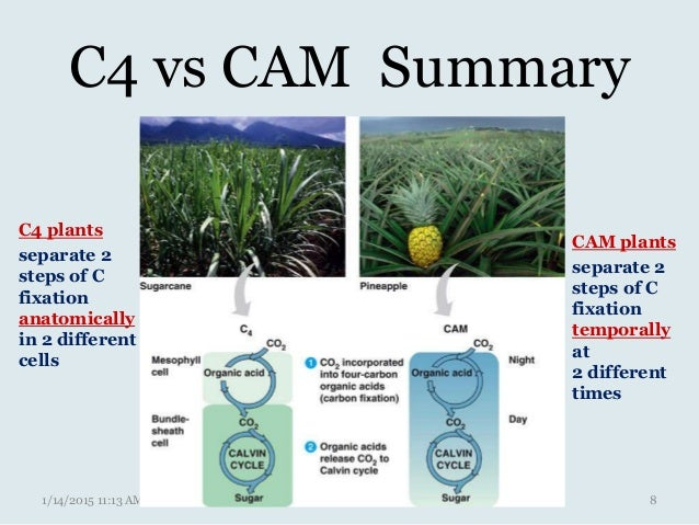 plant anatomy physiology with Cam 43500754 on Plant Project Ideas 373334 moreover Anatomy And Physiology Cell Organelles in addition Anatomy Physiology Lecture Notes Digestive System further Cam 43500754 in addition Animal And Plant Homeostasis And Physiology Study Guides.
