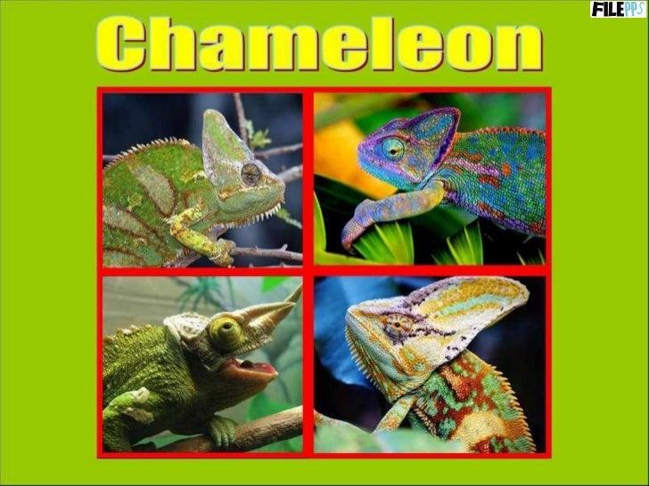 PowerPoint Show by Emerito Chameleon http://www.slideshare.net/mericelene
